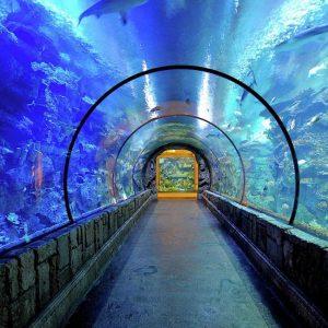Mandalay Bay Shark Reef Acuario
