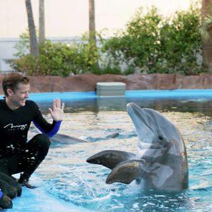 mirage secret garden dolphin